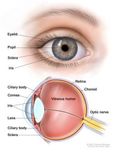 Cornea or Keratoconus Treatment